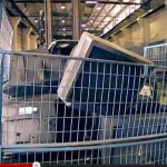 Nie mehr Müll – Leben ohne Abfall. Screenshot: YouTube.